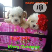 Baby Female Purebred Lhasa Apso | Dogs & Puppies for sale in Lagos State, Lagos Island