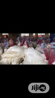 Healthy Foreign Organic Turkeys For Sale | Livestock & Poultry for sale in Lagos State, Oshodi-Isolo