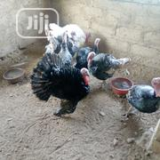 Buy Xmas & New Year Turkies N Chickens | Livestock & Poultry for sale in Osun State, Osogbo