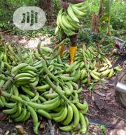 Fresh Plantain For Sale | Meals & Drinks for sale in Ogun State, Ado-Odo/Ota