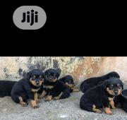 Baby Male Purebred Rottweiler | Dogs & Puppies for sale in Oyo State, Ogbomosho North