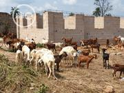 Goat For Christmas | Other Animals for sale in Abia State, Bende