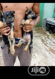 Baby Male Purebred German Shepherd Dog | Dogs & Puppies for sale in Oyo State, Atiba