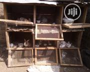 Adekwam Farm Mature & Grower Rabbits | Livestock & Poultry for sale in Osun State, Osogbo