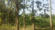 Land for Sale | Land & Plots For Sale for sale in Ondo State, Akure