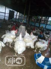 Healthy Big Broilers for Sale | Livestock & Poultry for sale in Rivers State, Port-Harcourt