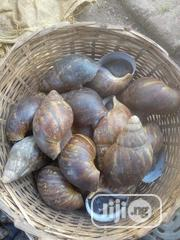 Medium Size Snails | Other Animals for sale in Lagos State, Ikorodu