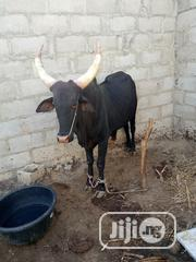 Cows Available For Ceremonies And Business   Livestock & Poultry for sale in Kano State, Nasarawa-Kano