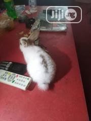 Rabbit For Sale | Livestock & Poultry for sale in Lagos State, Alimosho
