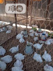 Broilers For Sale | Livestock & Poultry for sale in Abuja (FCT) State, Gwagwalada