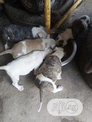 Young Female Purebred Bulldog | Dogs & Puppies for sale in Lagos State, Alimosho