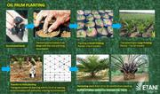 Hybrid Malaysia Palm Seeds   Feeds, Supplements & Seeds for sale in Lagos State, Ikorodu