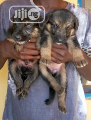Baby Female Purebred German Shepherd Dog | Dogs & Puppies for sale in Osun State, Osogbo