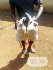 Chicken For Christmas | Livestock & Poultry for sale in Ogun State, Abeokuta South