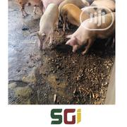 Semi Growers Pig | Livestock & Poultry for sale in Lagos State, Ikeja