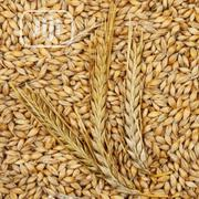 Barely Seed In Tonnes | Feeds, Supplements & Seeds for sale in Lagos State