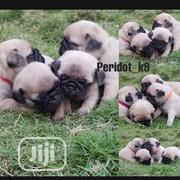 Baby Female Purebred Pug | Dogs & Puppies for sale in Rivers State, Port-Harcourt