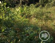 Land for Sale in the Heart of Calabar Municipality | Land & Plots For Sale for sale in Cross River State, Calabar