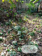 50ft by 100ft Plot for Sale | Land & Plots For Sale for sale in Edo State, Uhunmwonde