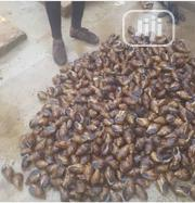 Catfish And Snailmeat! | Fish for sale in Ogun State, Odogbolu