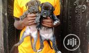 Baby Female Purebred Boerboel   Dogs & Puppies for sale in Delta State, Aniocha South
