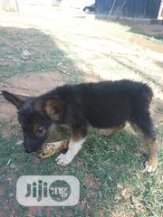 Baby Male Purebred German Shepherd Dog | Dogs & Puppies for sale in Abuja (FCT) State, Lugbe District