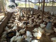 Very Sweet And Delicious Birds   Livestock & Poultry for sale in Lagos State, Ikeja
