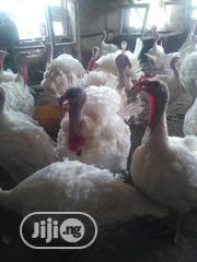 Foreign Turkey For Sale | Livestock & Poultry for sale in Lagos State, Ikeja