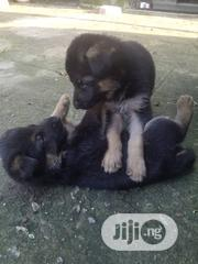 Young Female Purebred German Shepherd Dog   Dogs & Puppies for sale in Abuja (FCT) State, Kubwa