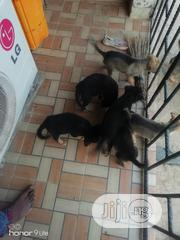Baby Female Purebred German Shepherd Dog | Dogs & Puppies for sale in Ogun State, Ifo