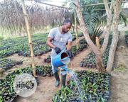 Farm Manager | Farming & Veterinary CVs for sale in Benue State, Otukpo