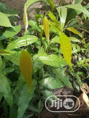 Masquerade Tree | Garden for sale in Oyo State, Egbeda
