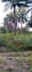 Virgin Land for Sale | Land & Plots For Sale for sale in Enugu, Enugu State, Nigeria