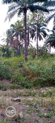 Virgin Land for Sale | Land & Plots For Sale for sale in Enugu State, Enugu