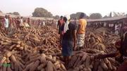 Benue Yam Sold @ Farm Price | Meals & Drinks for sale in Benue State, Logo