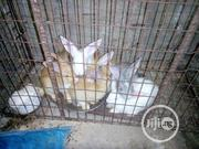 Adekwa Farm (Healthy Domestic Animals) | Other Animals for sale in Osun State, Osogbo