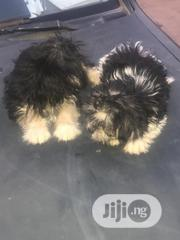 Young Male Purebred Lhasa Apso | Dogs & Puppies for sale in Ogun State, Ado-Odo/Ota