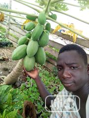 Agric And Improved Fruit Seedlings | Feeds, Supplements & Seeds for sale in Oyo State, Ona-Ara