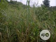A Plot of Land With Foundation for Sale | Land & Plots For Sale for sale in Edo State, Uhunmwonde