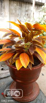 Flower Pot With Original Artificial Flower,So Strong And Beautiful.... | Garden for sale in Delta State, Oshimili North