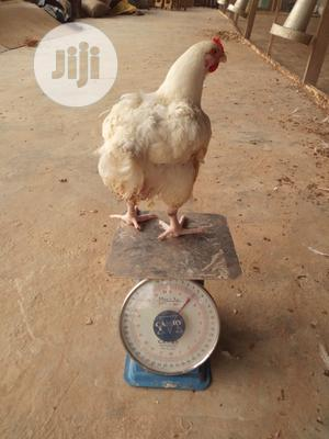 Broilers 2kg& Above Are Available. We Process And Package Also.. .