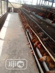 Fresh Quality Eggs | Meals & Drinks for sale in Oyo State, Ibadan North