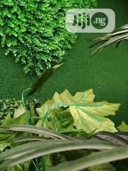 Synthetic Artificial Grass Mat For Doors And Floors   Landscaping & Gardening Services for sale in Lagos State, Ikeja