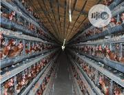 China Factory 160birds 25life Chicken Cages Battery Cages Poultry Cage | Farm Machinery & Equipment for sale in Abuja (FCT) State, Abaji