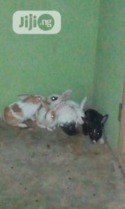 Well Healthy Rabbits Is Available For Sale | Livestock & Poultry for sale in Lagos State, Ojo