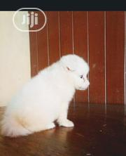 Baby Female Purebred Samoyed | Dogs & Puppies for sale in Lagos State, Ilupeju