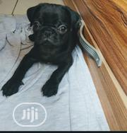 Baby Male Purebred Pug | Dogs & Puppies for sale in Lagos State, Ojota