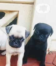 Baby Female Purebred Pug | Dogs & Puppies for sale in Lagos State, Yaba