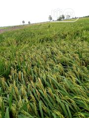 Rice For Farmers | Feeds, Supplements & Seeds for sale in Kano State, Wudil