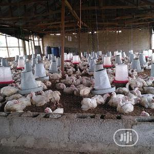 Poultry Litter For Sale